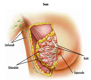 tumore_al_seno1